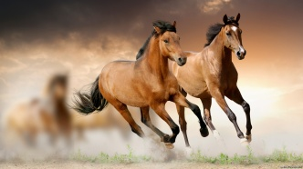 two-brown-horses-running-3840x2160