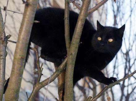 black-cat-110513